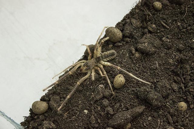 Nepríjemne vyzerajúci pavúk